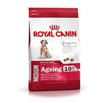 Royal Canin, starzenie się Maxi 8 + kompletna karma 15kg