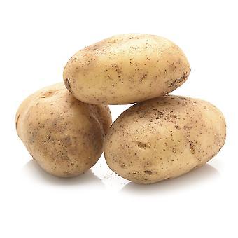 Elveden Fresh British Baking Potatoes 40's