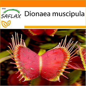 Saflax - giardino nella borsa-10 semi - Venus Fly Trap - Dionée attrape mouche - Venere acchiappamosche - Venus atrapamoscas - Venus - Fliegenfalle