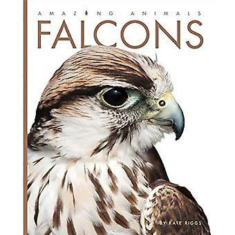 Falcons (Amazing Animals)