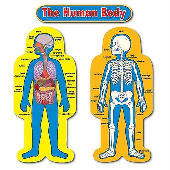Kind-Größe menschlichen Körper Bulletin Board Set