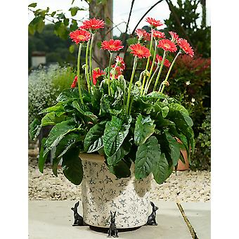Potty Feet Brushed Silver Hare Themed Plant Pot Feet - Silver Color Set of 3