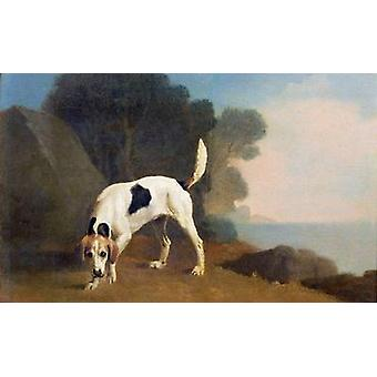 Foxhound sur le parfum, c.1760 (huile sur le papier .. - Reproduction d'art
