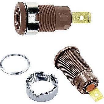 Toma de corriente de seguridad St-ubli SLB4-F Socket, marrón incorporado 1 ud(s)