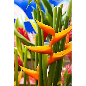 Heliconia Flower Seafront Market Poster Print by Walter Bibikow