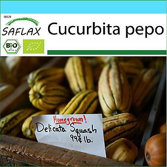 Saflax - Gavesett - 6 frø - Organisk - Squash - Delikatesse - BIO - Courge - Delikatesse - BIO - Zucca - Delikatesse - Ecológico - Calabaza - Delikatesse - BIO - Kürbis - Delikatesse