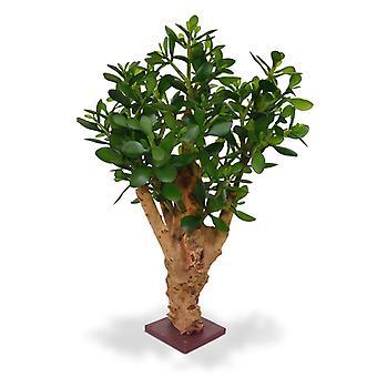 Kunst crassula plant 60 cm op de basis