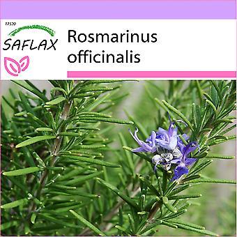Saflax - 100 zaden - rozemarijn - Romarin - Rosmarino - Romero blanco - Echter Rosmarin