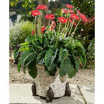 Potty Feet Decorative Emperor Penguin Themed Plant Pot Feet - Bronze Color 3pc