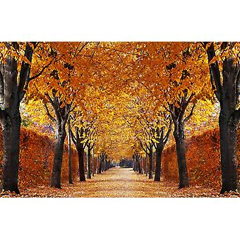 Wall Mural Autumn Alley