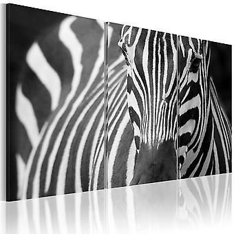 Schilderij - Mevr. Zebra