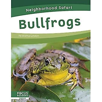 Neighborhood Safari: Bullfrogs