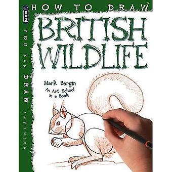 How to Draw British Wildlife