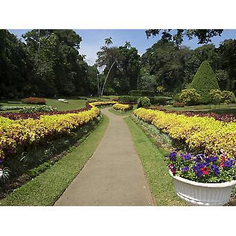 Royal Botanical Gardens Peradeniya Province centrale de Kandy, Sri Lanka Poster Print