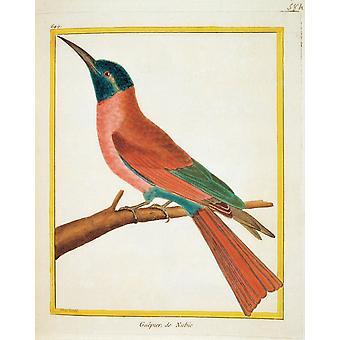 Tuntematon väri litografiat Afrikkalainen eläimiä 1700-luvun Litography Italia yksityinen kokoelma Everett CollectionMondadori salkun Juliste Tulosta