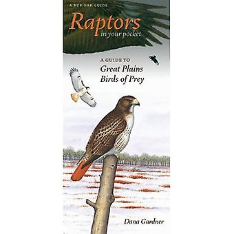 Raptors in Your Pocket: A Guide to Great Plains Birds of Prey