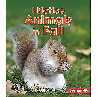 Jag märker djur i höst (första steget facklitteratur - observerar hösten)