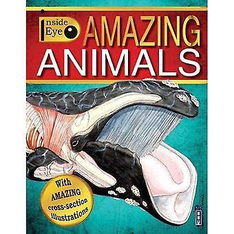 Inside Eye: Amazing Animals