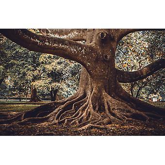 Vægmaleri Vægmaleri Tree Root