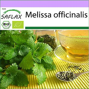 Saflax - 1000 sementes - Orgânico - Bálsamo de Limão - BIO - Mélisse officinale - BIO - Melissa - Ecológica - Melisa - BIO - Zitronenmelisse