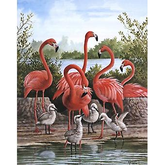 Flamingo 1 Poster Print by Ron Jenkins (16 x 20)