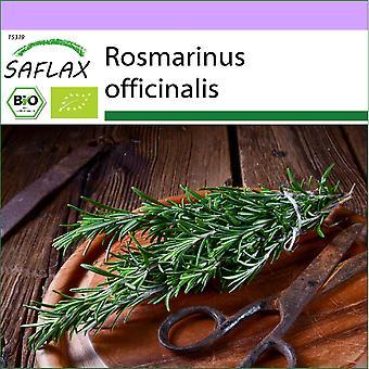 Saflax - 40 Samen - Bio - Rosmarin - BIO - Romarin - BIO - Rosmarino - Ecol'gico - Romero - BIO - Rosmarin