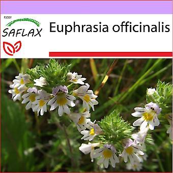 Saflax - 200 semi - Eufrasia - Euphraise de Rostkov - Eufrasia officinale - Eufrasia - Augentrost