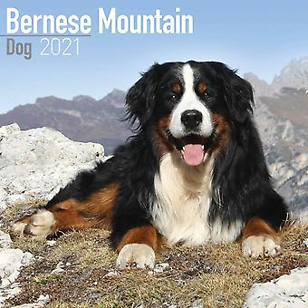 Otter House Square Wall Calendar 2021 - Bernese Mountain Dog