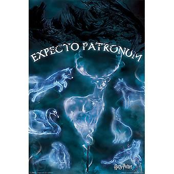 Harry Potter - Patronus Maxi Poster