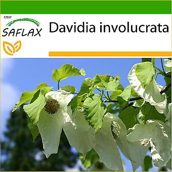 Saflax - 1 siemeniä - maaperän - Dove Tree - Arbre aux mouchoirs - Albero dei fazzoletti - Árbol del pañuelo - Taschentuchbaum