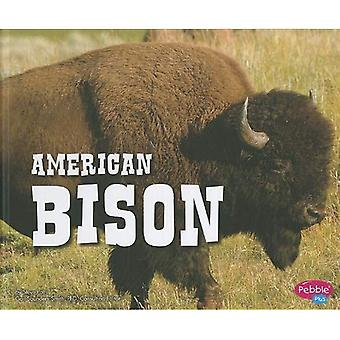 American Bison (North American Animals)