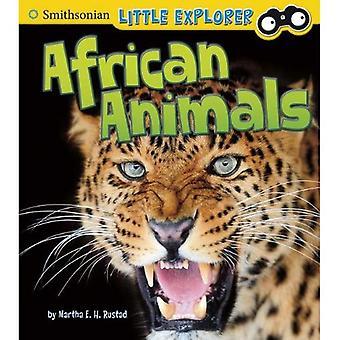 Dyr i Afrika (Smithsonian lille Explorer)