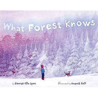Vad skogen vet