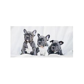 Fransk bulldog Beach håndklæde