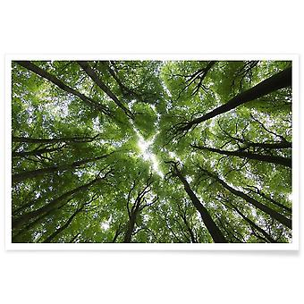 IMPRESSION JUNIQE - Beechwood - Affiche forests en vert