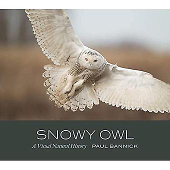 Sneeuwuil: een visuele natuurlijke geschiedenis