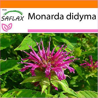 Saflax - hage i posen - 20 frø - Bergamot / Oswego te - Monarde - Bergamotto - Bergamota silvestre - Goldmelisse