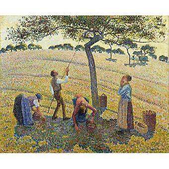Apple picking at Eragny-sur-Epte, Camille Pissarro, 50x40cm