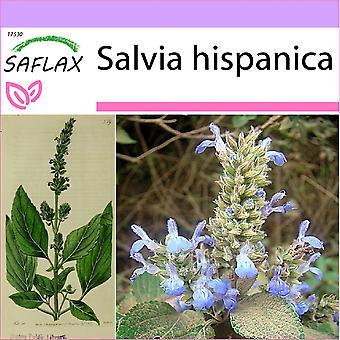 Saflax - 500 sementes - mexicano Chia - Chia - Chia - Chía - Mexikanische Chia