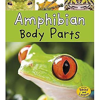 Amfibieën lichaamsdelen (dierlijke lichaamsdelen)