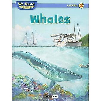 Whales (We Read Phonics - Level 3)