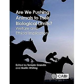 Zijn We duwen dieren naar hun biologische grenzen?