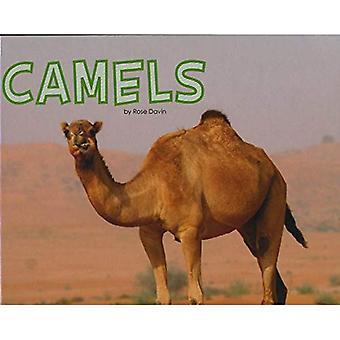 Kamele (Pebble Plus: Meet Wüste Tiere)