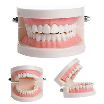 Pro Tandheelkundige Studie Onderwijs Witte Tanden Model
