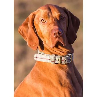 Ylelliset vaaleat Tweed-koiran kaulukset