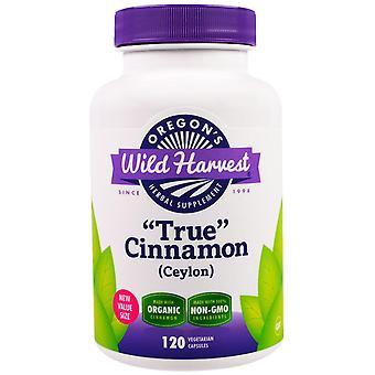 """Oregon's Wild Harvest, """"True"""" Cinnamon (Ceylon), 120 Vegetarian Capsules"""