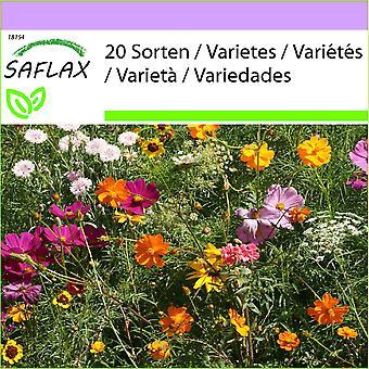 Saflax - 1000 semi - Cutflower Mix - Prairie de fleurs tagliate - Prato di fiori da recidere - ONU prado flores de cortadas - Schnittblumen Wiese