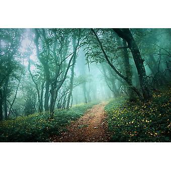 Tapeta Mural Droga przez tajemniczy mroczny mglisty las