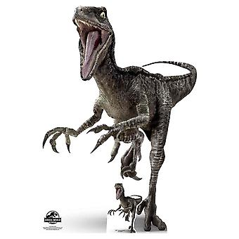Velociraptor Blue Dinosaur Official Jurassic World Lifesize Cardboard Cutout