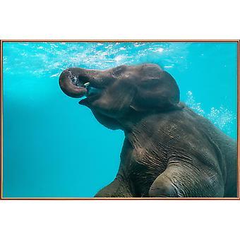 JUNIQE Print - Swimming Elephant - Posters d'éléphants en gris et turquoise